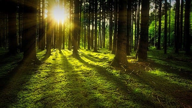 pădurea, Ion Horea, Povestire